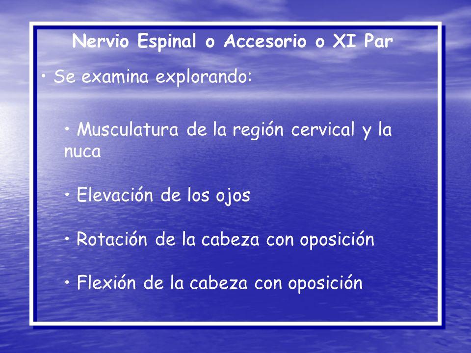 Nervio Espinal o Accesorio o XI Par