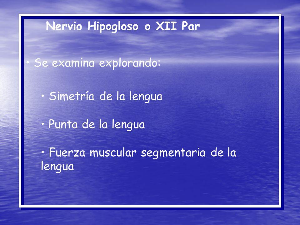 Nervio Hipogloso o XII Par