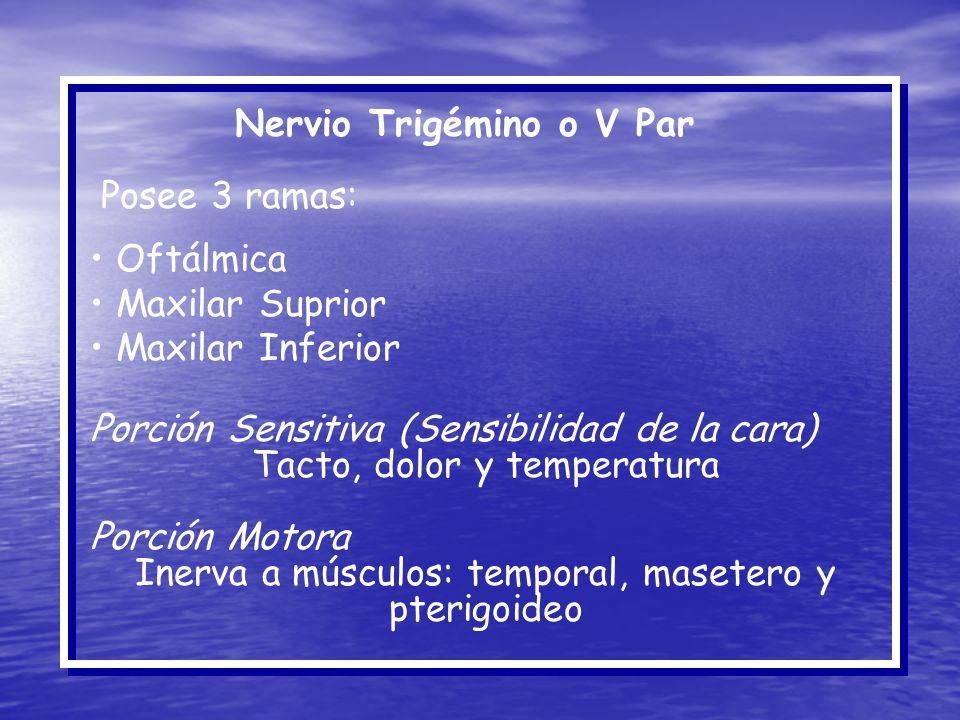 Nervio Trigémino o V Par Posee 3 ramas: Oftálmica Maxilar Suprior