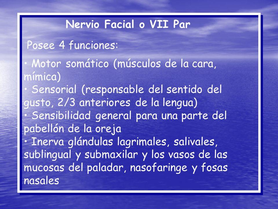 Nervio Facial o VII Par Posee 4 funciones: Motor somático (músculos de la cara, mímica)
