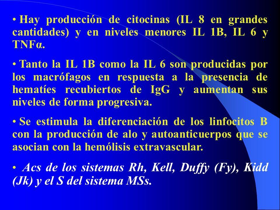 Hay producción de citocinas (IL 8 en grandes cantidades) y en niveles menores IL 1B, IL 6 y TNFα.