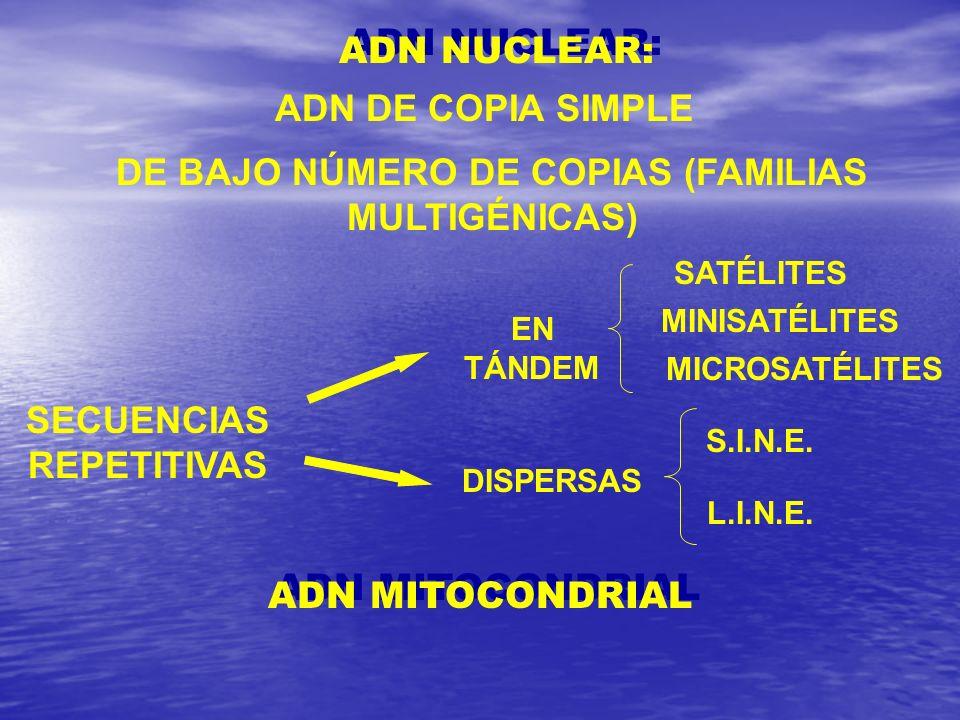 DE BAJO NÚMERO DE COPIAS (FAMILIAS MULTIGÉNICAS)