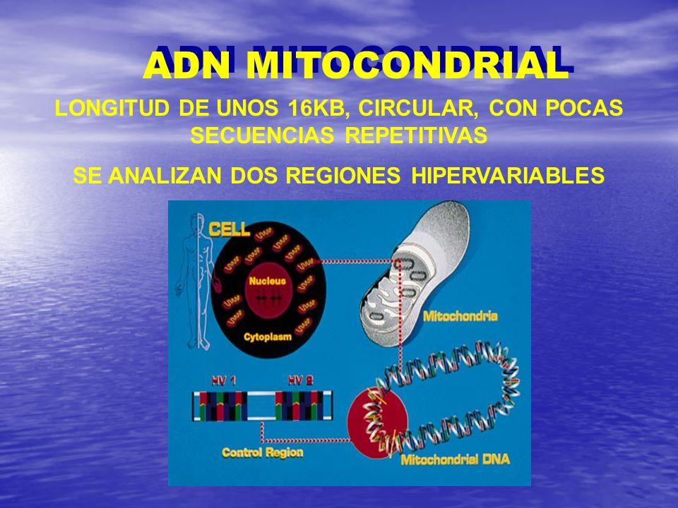 ADN MITOCONDRIAL LONGITUD DE UNOS 16KB, CIRCULAR, CON POCAS SECUENCIAS REPETITIVAS.