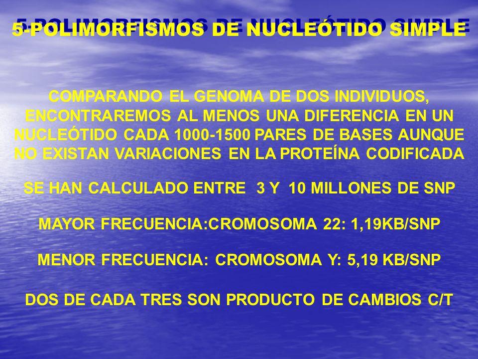 5-POLIMORFISMOS DE NUCLEÓTIDO SIMPLE