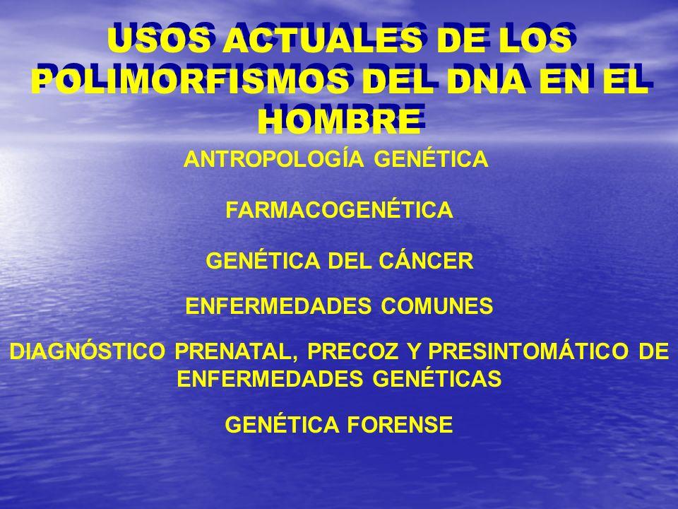 USOS ACTUALES DE LOS POLIMORFISMOS DEL DNA EN EL HOMBRE
