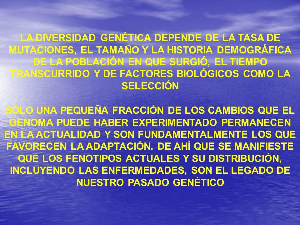 LA DIVERSIDAD GENÉTICA DEPENDE DE LA TASA DE MUTACIONES, EL TAMAÑO Y LA HISTORIA DEMOGRÁFICA DE LA POBLACIÓN EN QUE SURGIÓ, EL TIEMPO TRANSCURRIDO Y DE FACTORES BIOLÓGICOS COMO LA SELECCIÓN