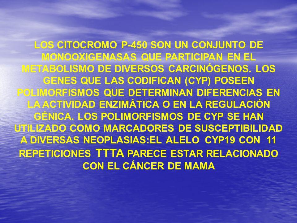 LOS CITOCROMO P-450 SON UN CONJUNTO DE MONOOXIGENASAS QUE PARTICIPAN EN EL METABOLISMO DE DIVERSOS CARCINÓGENOS.