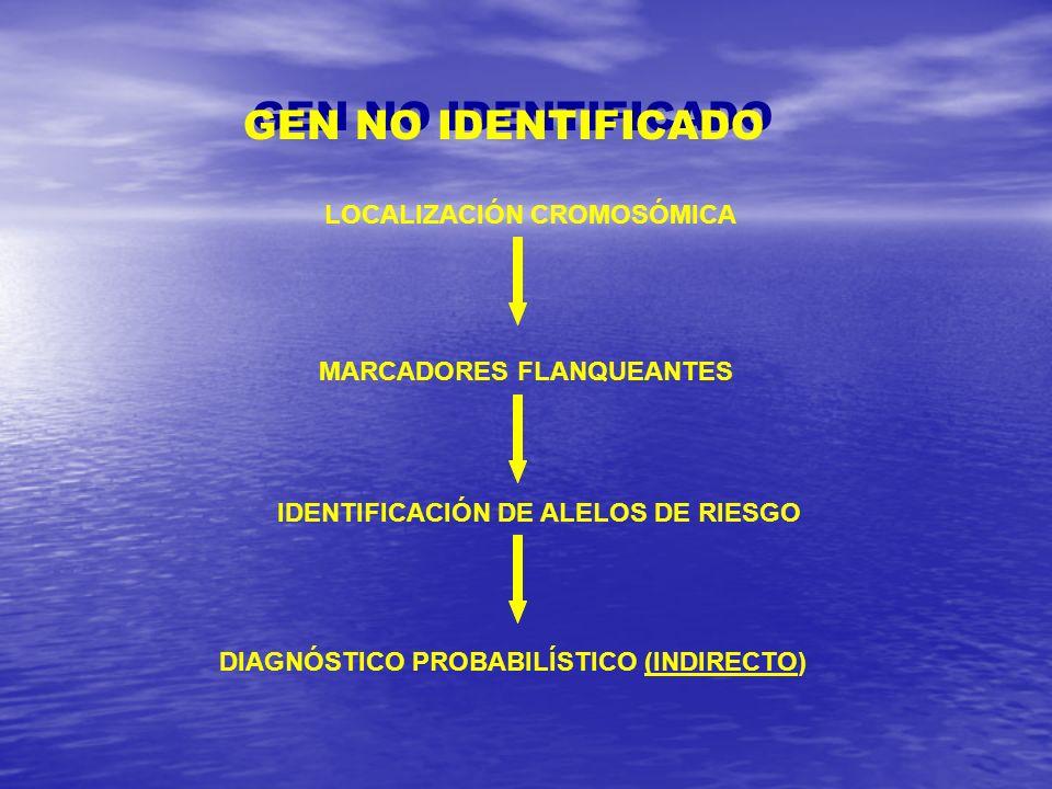 GEN NO IDENTIFICADO LOCALIZACIÓN CROMOSÓMICA MARCADORES FLANQUEANTES