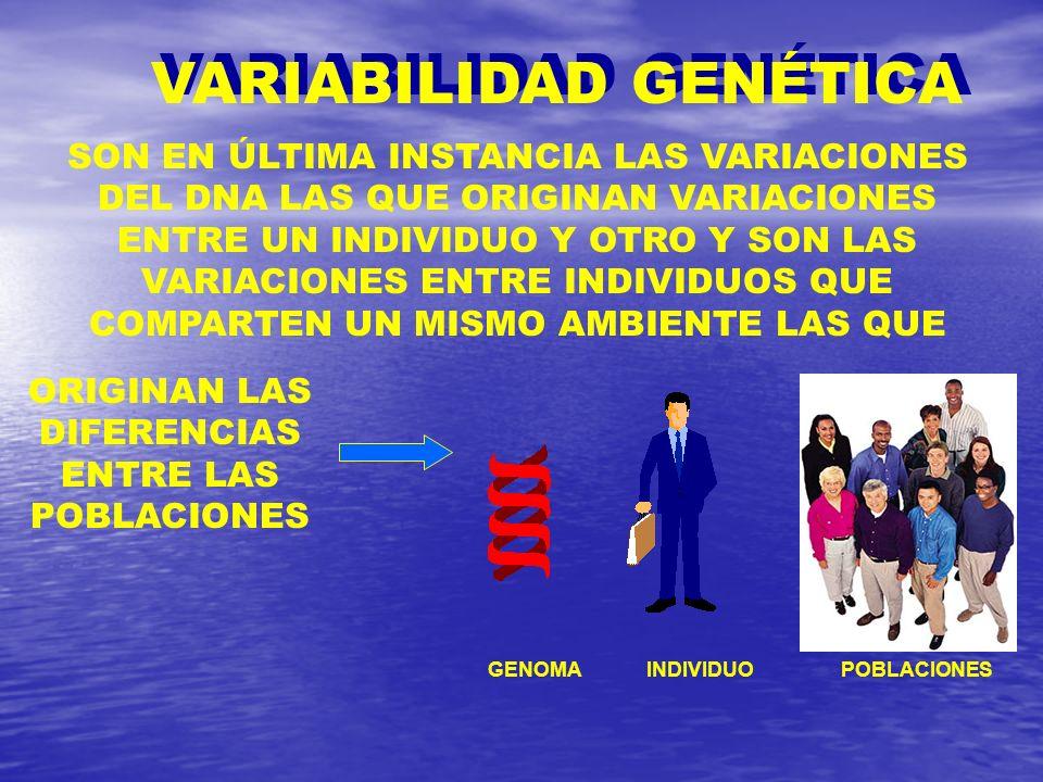 VARIABILIDAD GENÉTICA ORIGINAN LAS DIFERENCIAS ENTRE LAS POBLACIONES