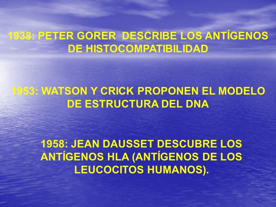 1938: PETER GORER DESCRIBE LOS ANTÍGENOS DE HISTOCOMPATIBILIDAD