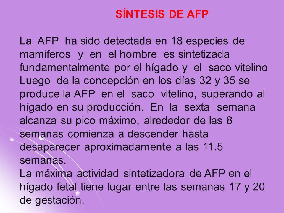 SÍNTESIS DE AFP
