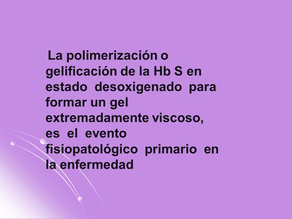 La polimerización o gelificación de la Hb S en estado desoxigenado para formar un gel extremadamente viscoso, es el evento fisiopatológico primario en la enfermedad