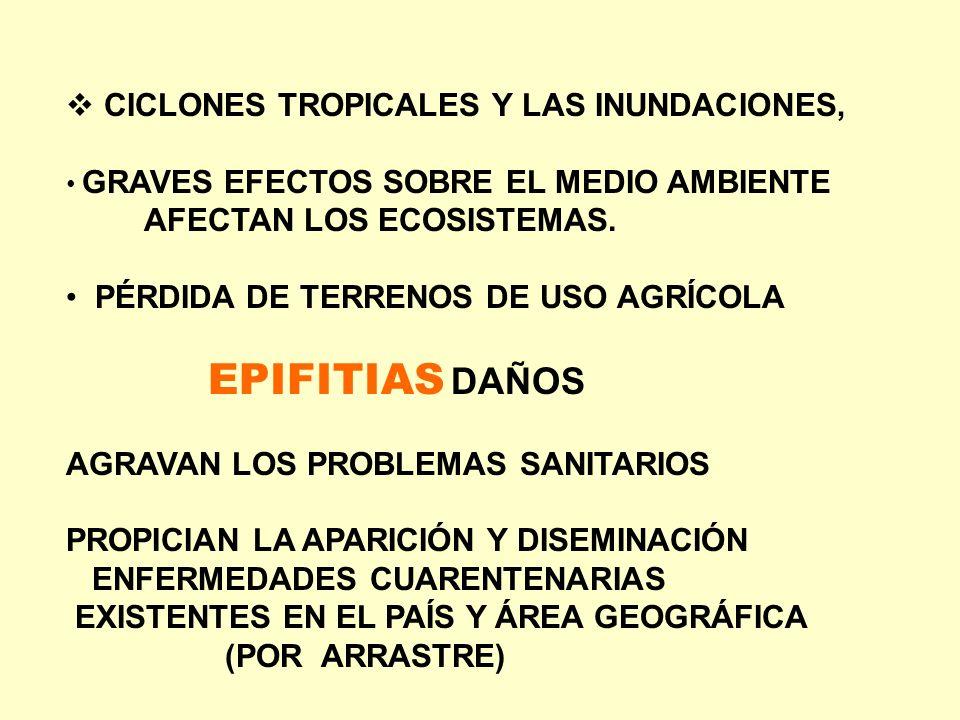 EPIFITIAS DAÑOS CICLONES TROPICALES Y LAS INUNDACIONES,