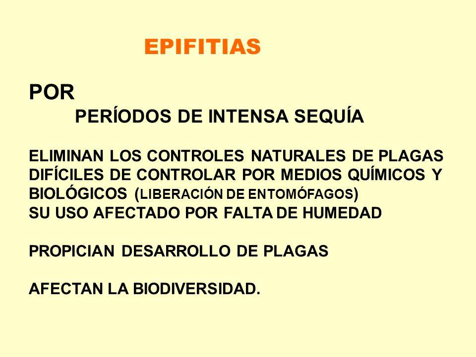 EPIFITIAS POR PERÍODOS DE INTENSA SEQUÍA