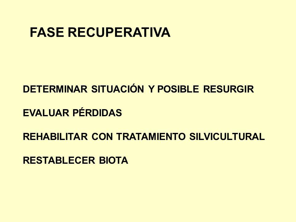FASE RECUPERATIVA DETERMINAR SITUACIÓN Y POSIBLE RESURGIR