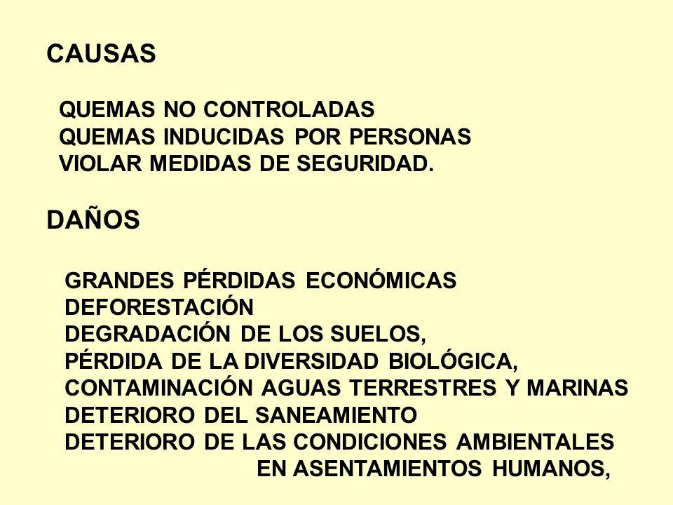 CAUSAS DAÑOS QUEMAS NO CONTROLADAS QUEMAS INDUCIDAS POR PERSONAS