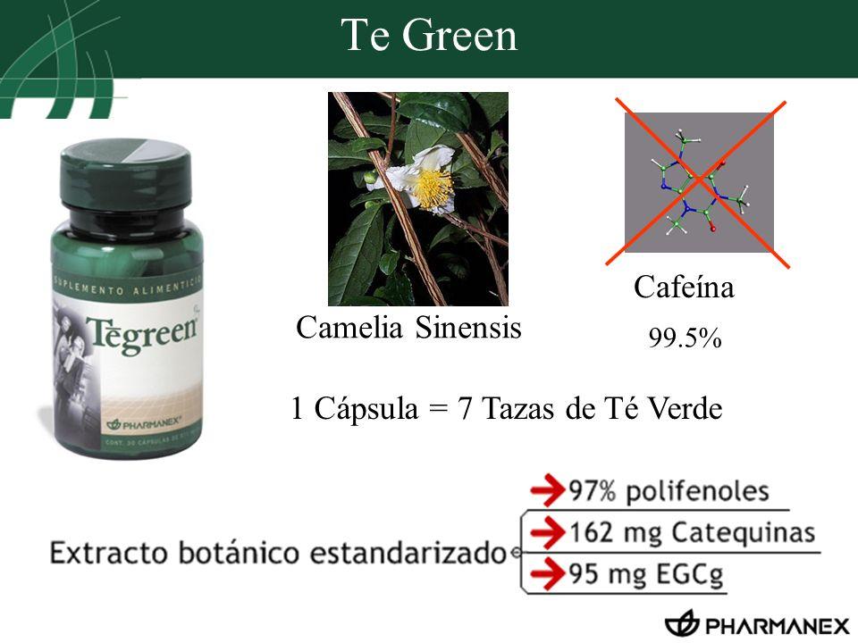 Te Green Cafeína Camelia Sinensis 1 Cápsula = 7 Tazas de Té Verde