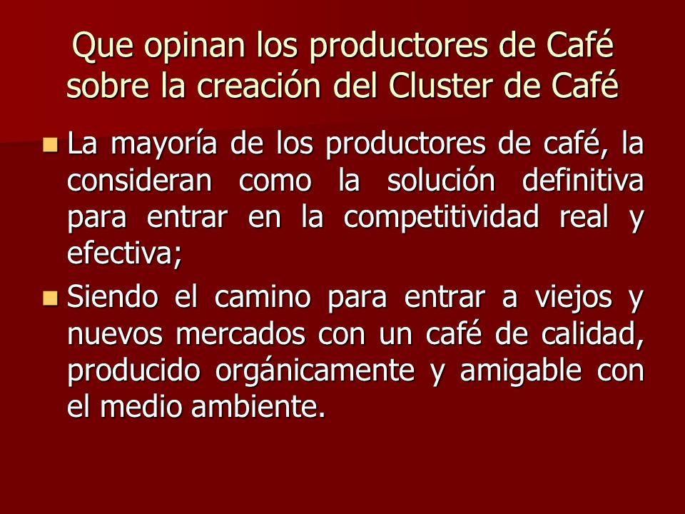 Que opinan los productores de Café sobre la creación del Cluster de Café