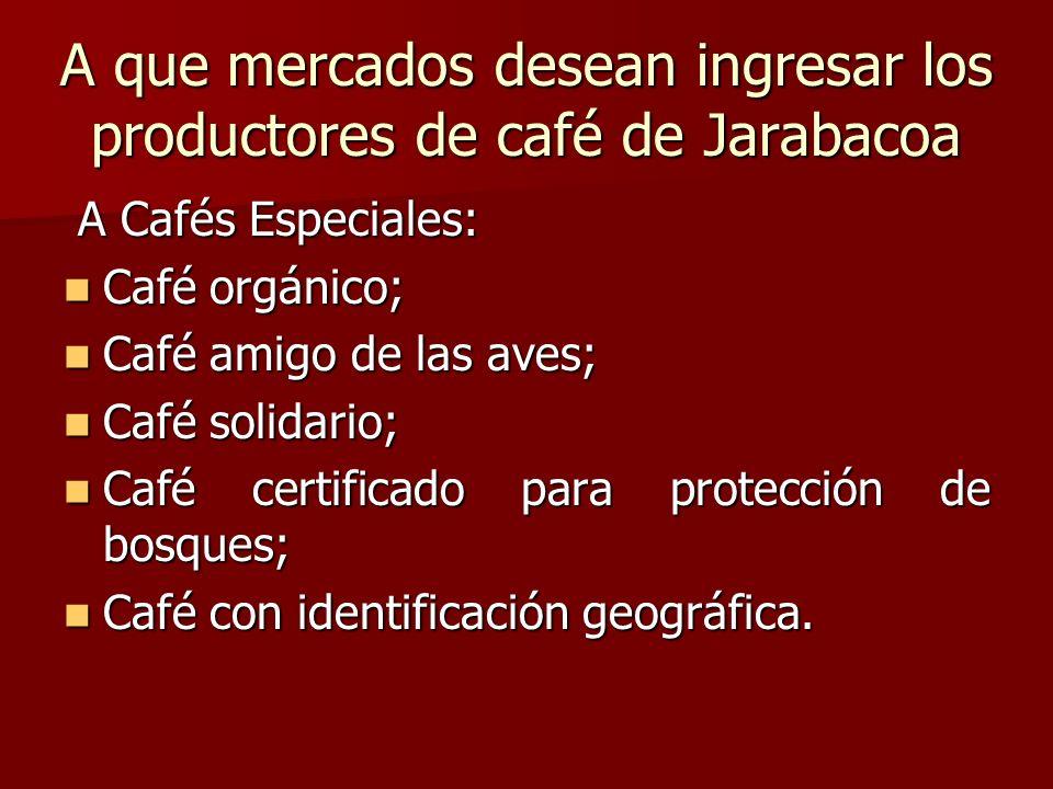 A que mercados desean ingresar los productores de café de Jarabacoa