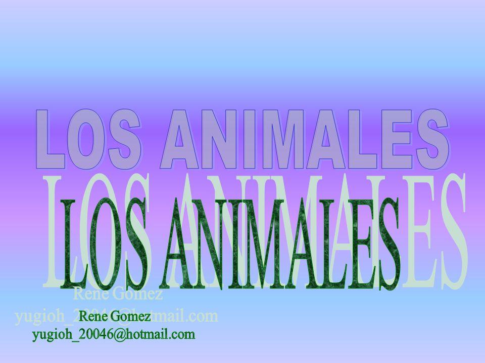 LOS ANIMALES LOS ANIMALES Rene Gomez yugioh_20046@hotmail.com