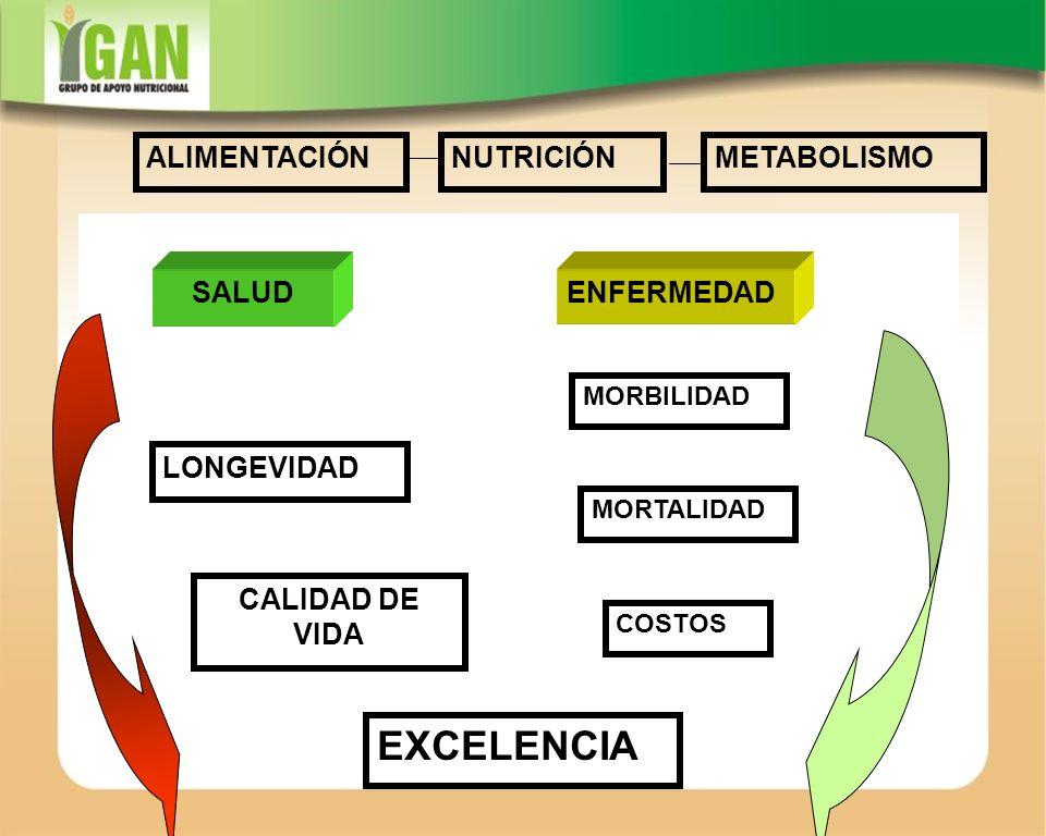 EXCELENCIA ALIMENTACIÓN NUTRICIÓN METABOLISMO SALUD ENFERMEDAD