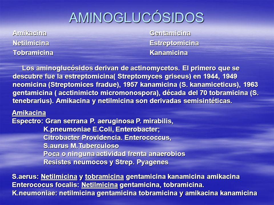 AMINOGLUCÓSIDOS Amikacina Gentamicina Netilmicina Estreptomicina