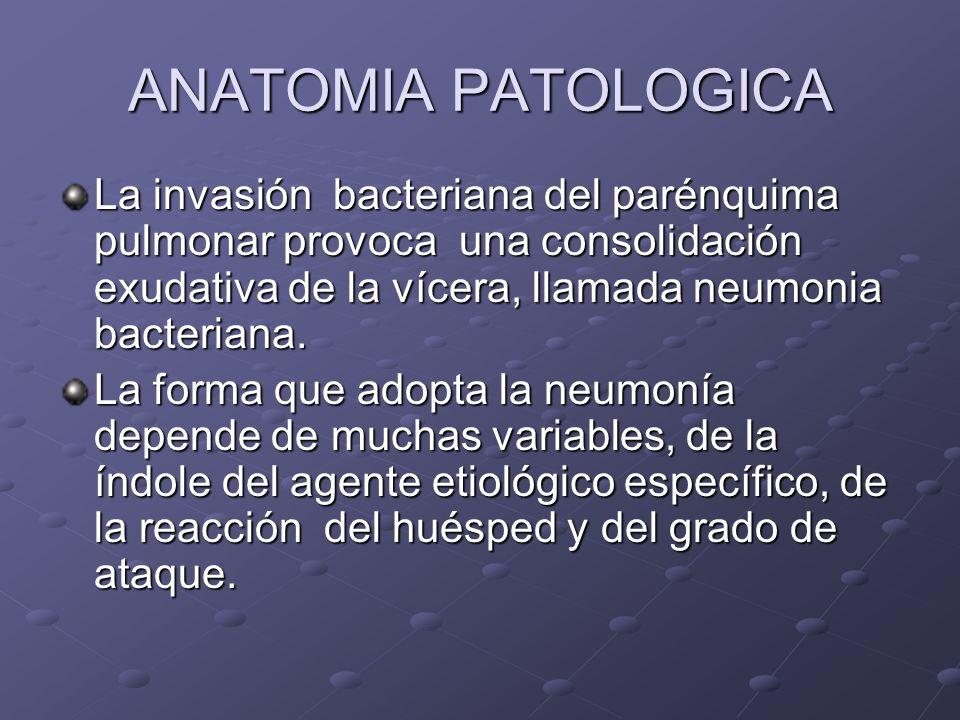 ANATOMIA PATOLOGICA La invasión bacteriana del parénquima pulmonar provoca una consolidación exudativa de la vícera, llamada neumonia bacteriana.