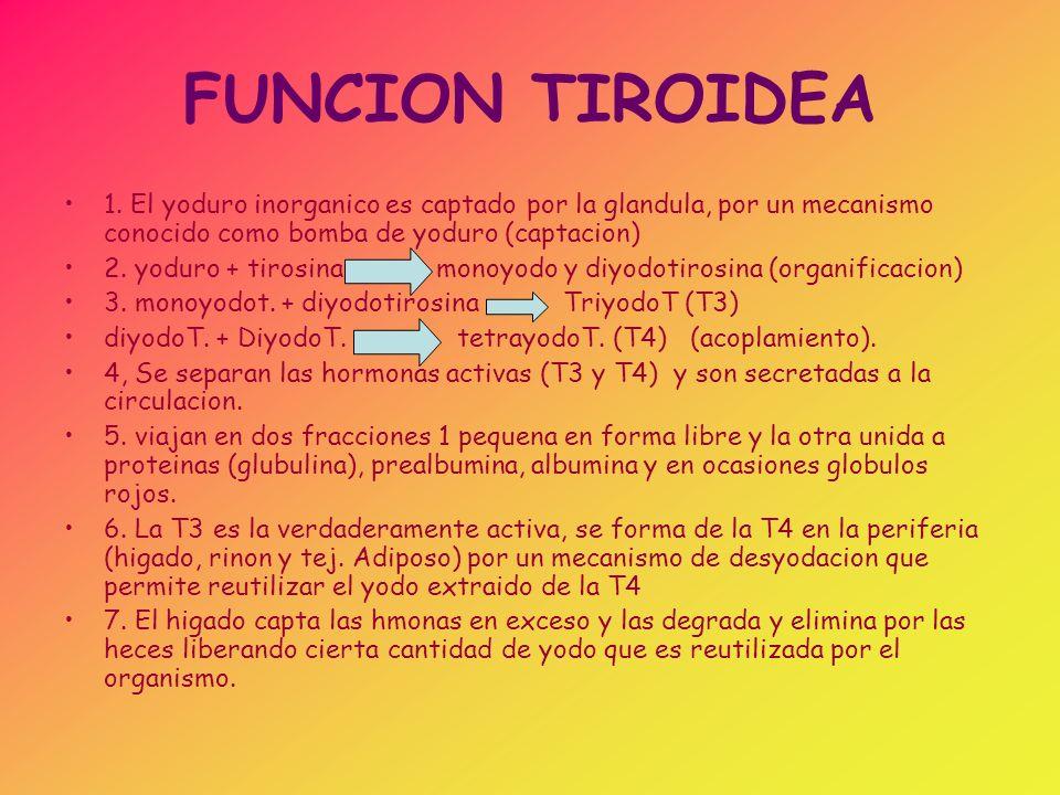 FUNCION TIROIDEA 1. El yoduro inorganico es captado por la glandula, por un mecanismo conocido como bomba de yoduro (captacion)