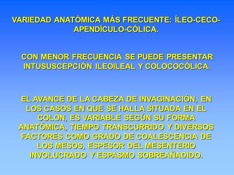 VARIEDAD ANATÓMICA MÁS FRECUENTE: ÍLEO-CECO-APENDÍCULO-CÓLICA.