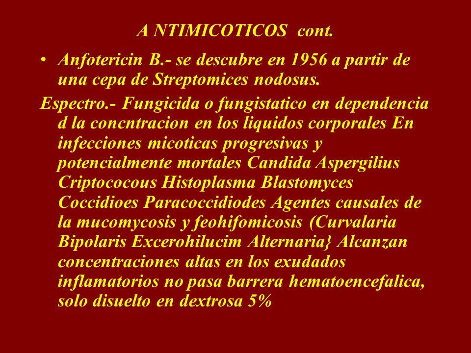 A NTIMICOTICOS cont.Anfotericin B.- se descubre en 1956 a partir de una cepa de Streptomices nodosus.