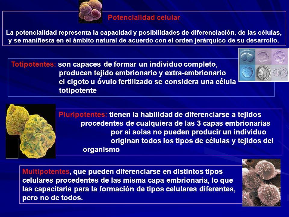 Potencialidad celular