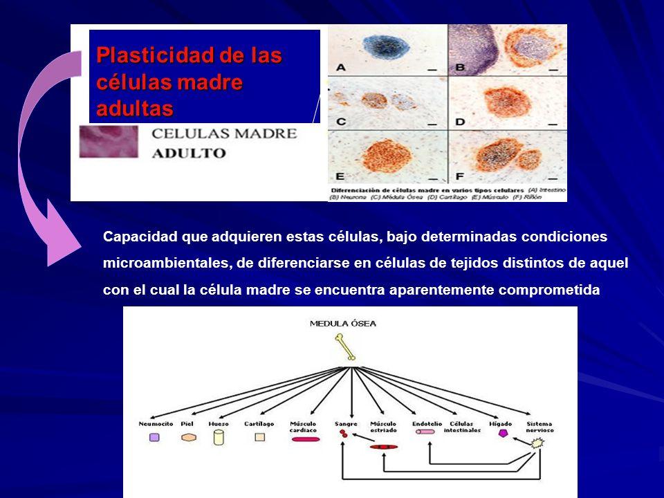 Plasticidad de las células madre adultas
