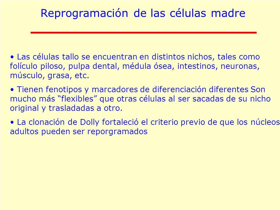 Reprogramación de las células madre