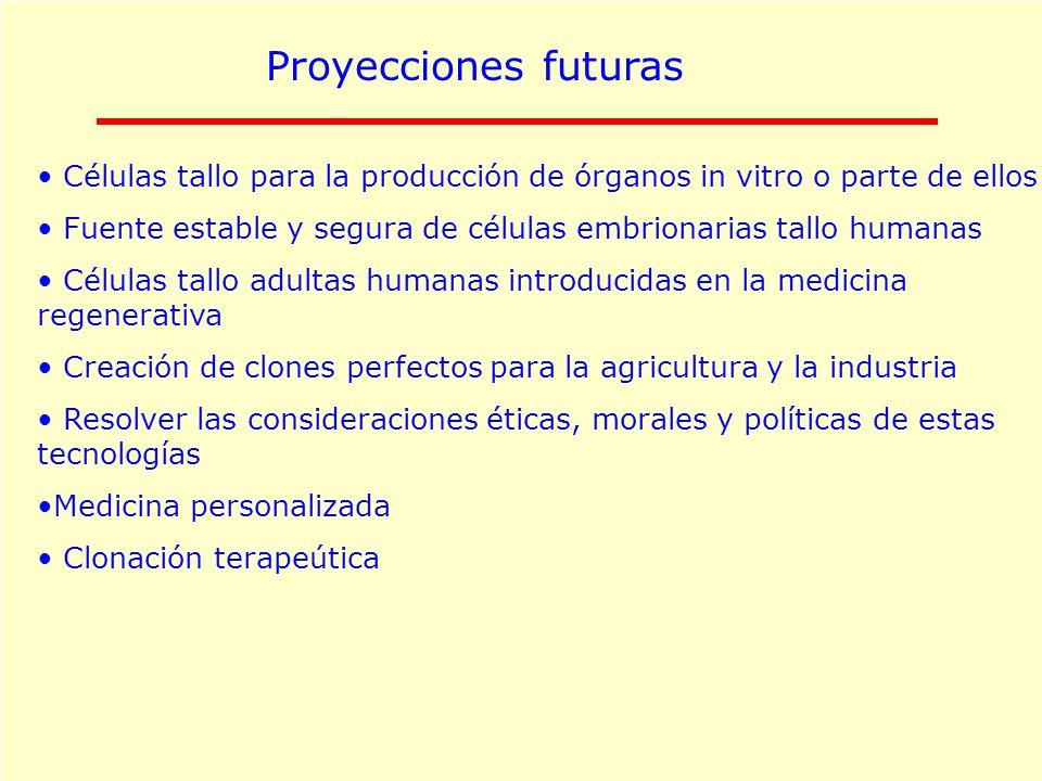 Proyecciones futuras Células tallo para la producción de órganos in vitro o parte de ellos.