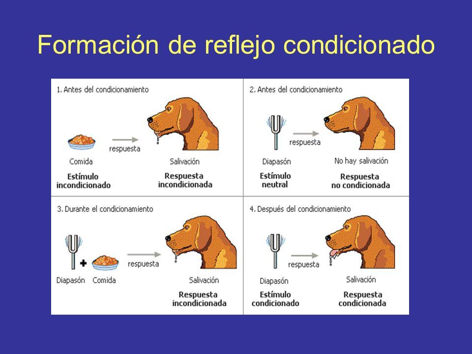 Formación de reflejo condicionado