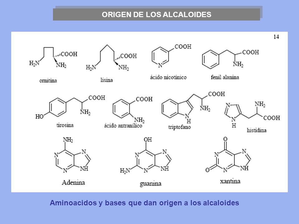 ORIGEN DE LOS ALCALOIDES
