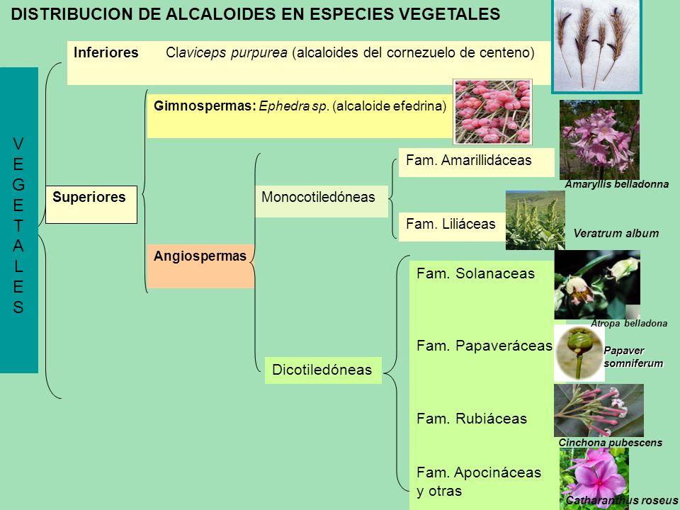 DISTRIBUCION DE ALCALOIDES EN ESPECIES VEGETALES