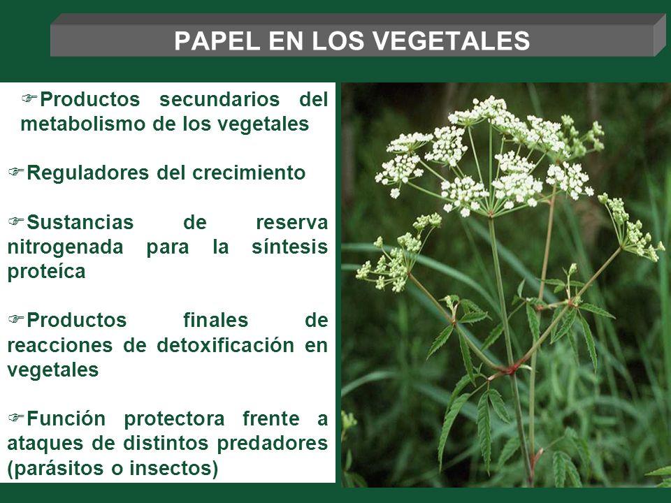 PAPEL EN LOS VEGETALES Productos secundarios del metabolismo de los vegetales. Reguladores del crecimiento.