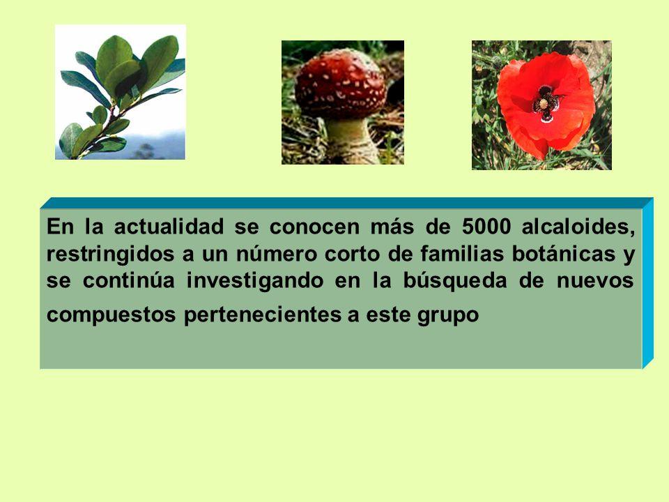 En la actualidad se conocen más de 5000 alcaloides, restringidos a un número corto de familias botánicas y se continúa investigando en la búsqueda de nuevos compuestos pertenecientes a este grupo