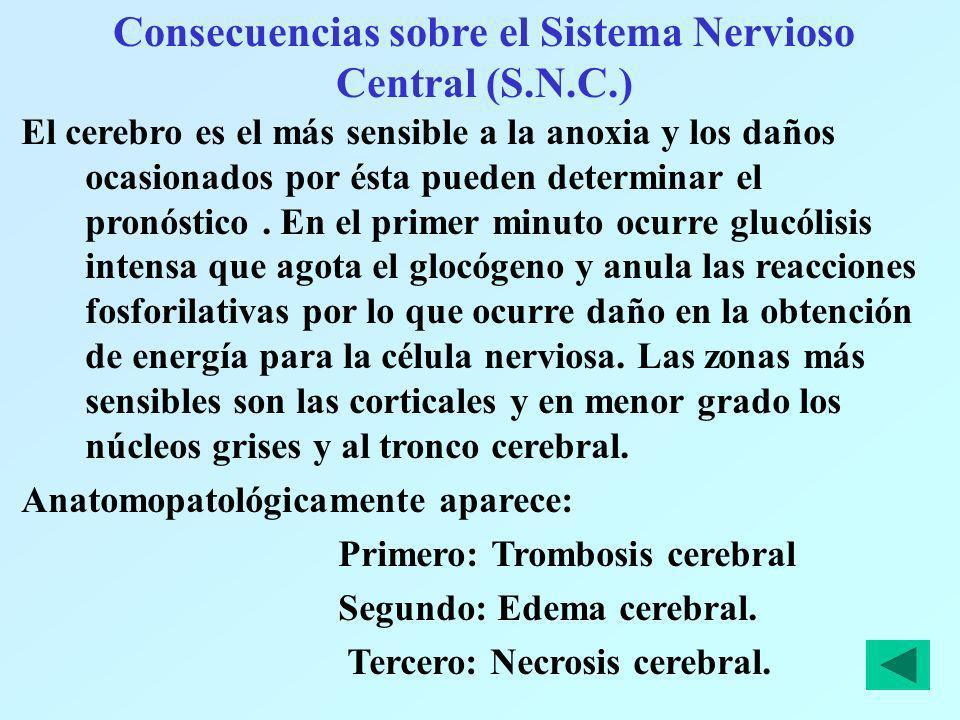 Consecuencias sobre el Sistema Nervioso Central (S.N.C.)