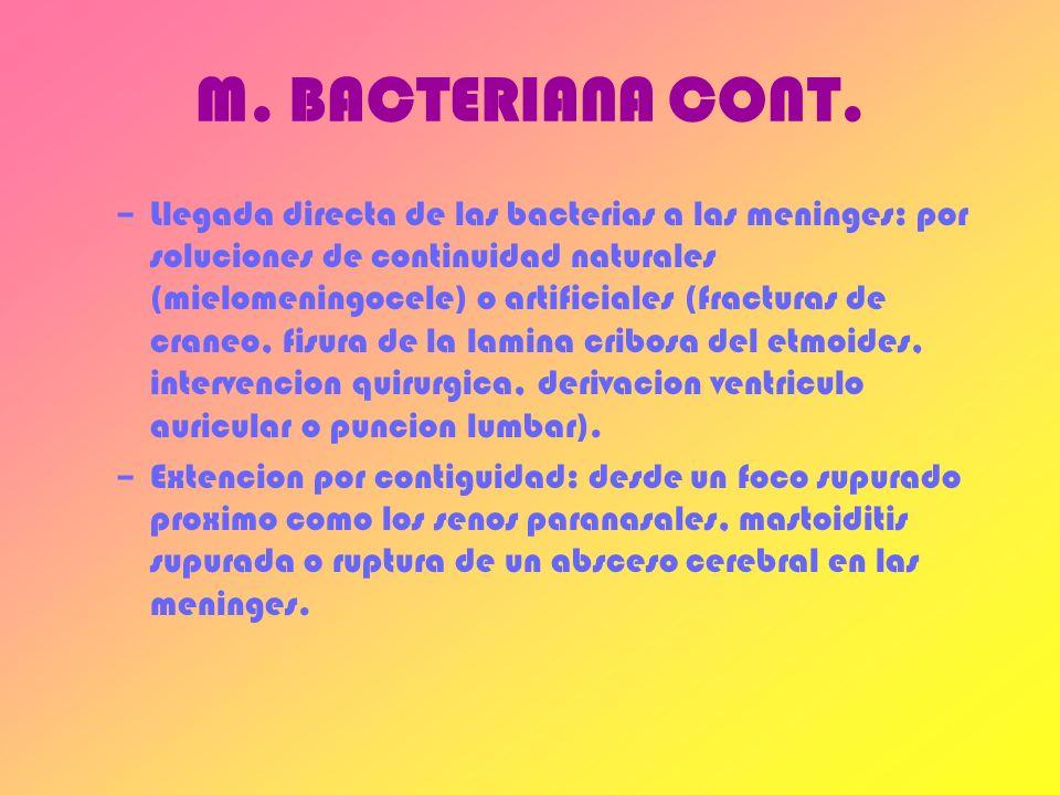 M. BACTERIANA CONT.