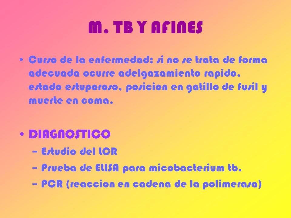 M. TB Y AFINES DIAGNOSTICO