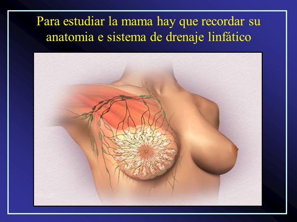 Para estudiar la mama hay que recordar su anatomia e sistema de drenaje linfático