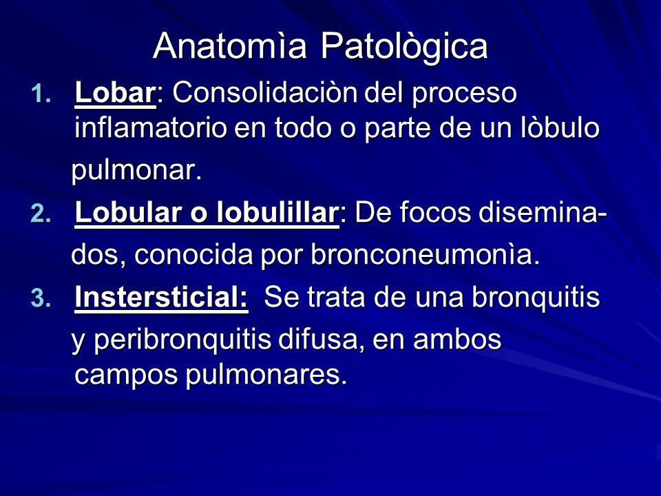 Anatomìa PatològicaLobar: Consolidaciòn del proceso inflamatorio en todo o parte de un lòbulo. pulmonar.