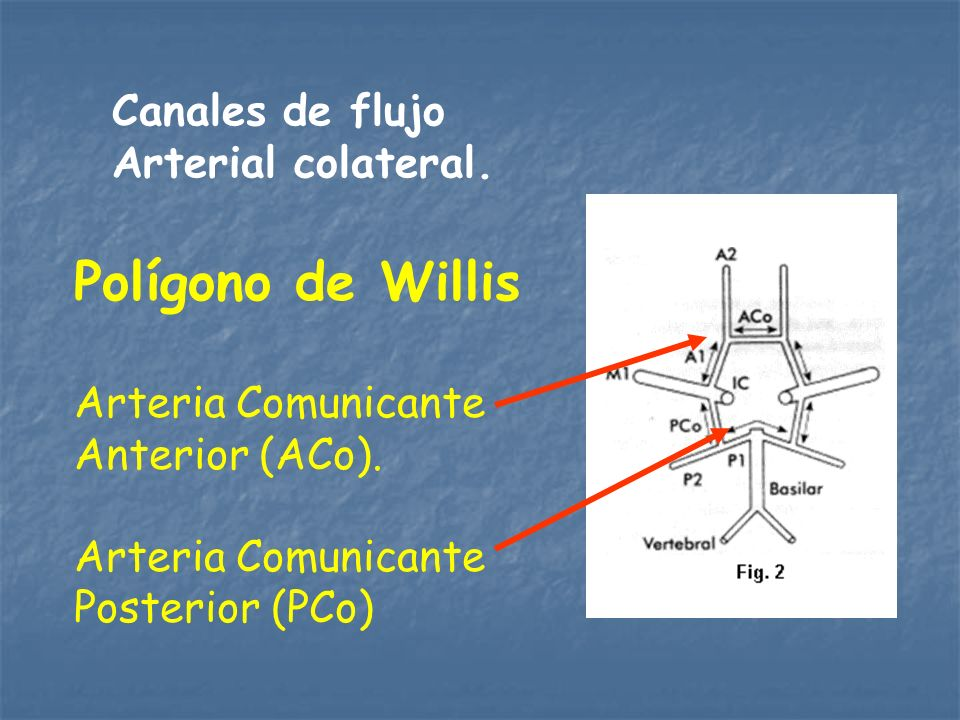 Polígono de Willis Canales de flujo Arterial colateral.
