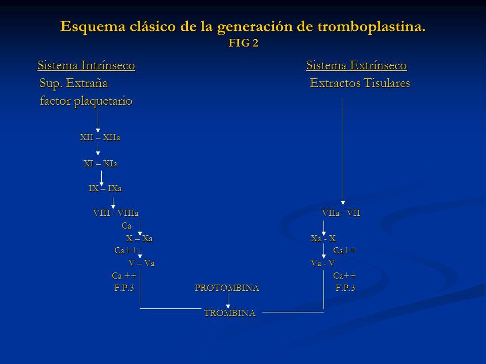 Esquema clásico de la generación de tromboplastina. FIG 2