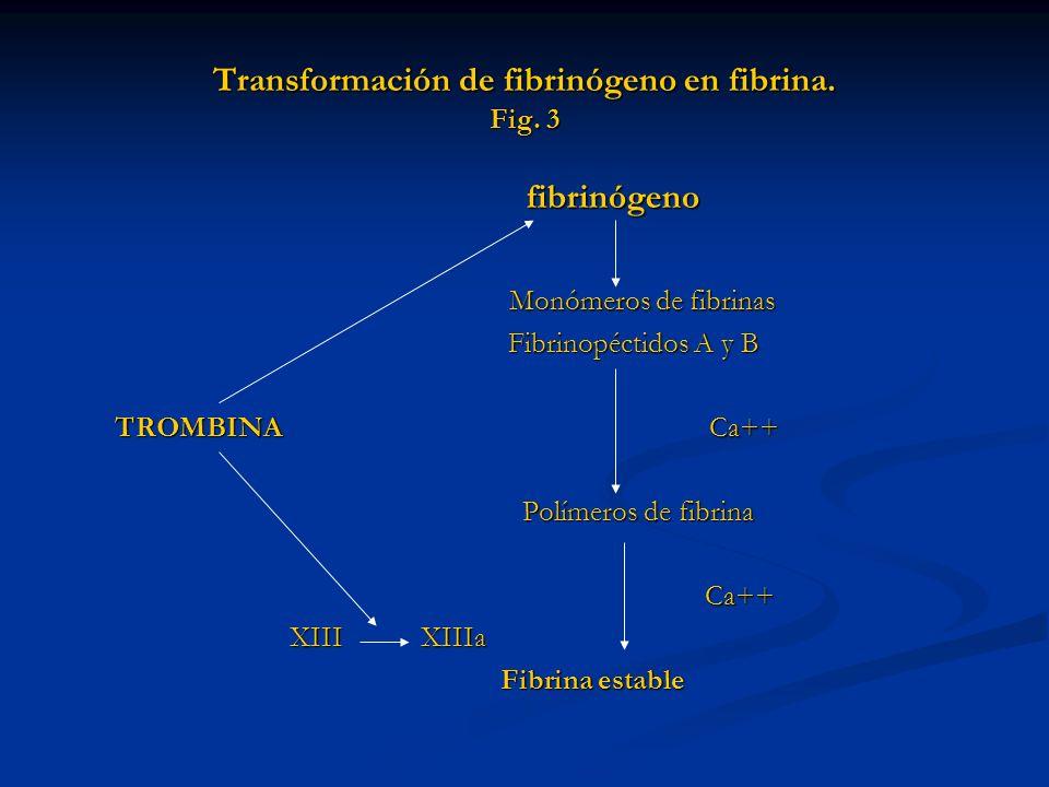 Transformación de fibrinógeno en fibrina. Fig. 3
