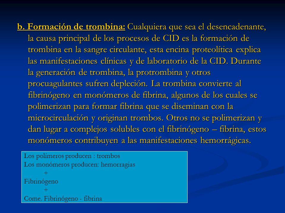 b. Formación de trombina: Cualquiera que sea el desencadenante, la causa principal de los procesos de CID es la formación de trombina en la sangre circulante, esta encina proteolítica explica las manifestaciones clínicas y de laboratorio de la CID. Durante la generación de trombina, la protrombina y otros procuagulantes sufren depleción. La trombina convierte al fibrinógeno en monómeros de fibrina, algunos de los cuales se polimerizan para formar fibrina que se diseminan con la microcirculación y originan trombos. Otros no se polimerizan y dan lugar a complejos solubles con el fibrinógeno – fibrina, estos monómeros contribuyen a las manifestaciones hemorrágicas.