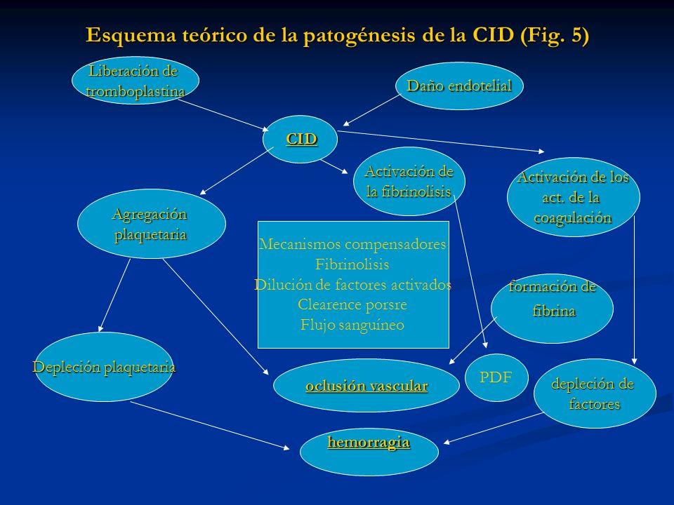 Esquema teórico de la patogénesis de la CID (Fig. 5)