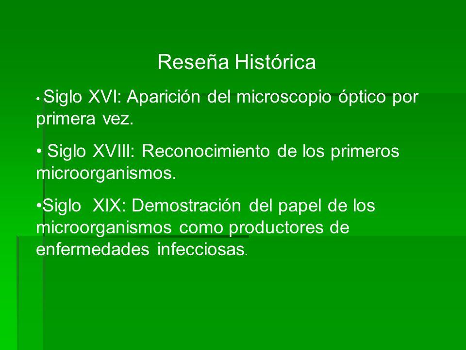 Reseña Histórica Siglo XVI: Aparición del microscopio óptico por primera vez. Siglo XVIII: Reconocimiento de los primeros microorganismos.